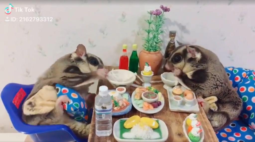 蜜袋鼯開心「翹腳腳吃情侶餐」 甜蜜模樣逼哭魯蛇:單身錯了嗎?