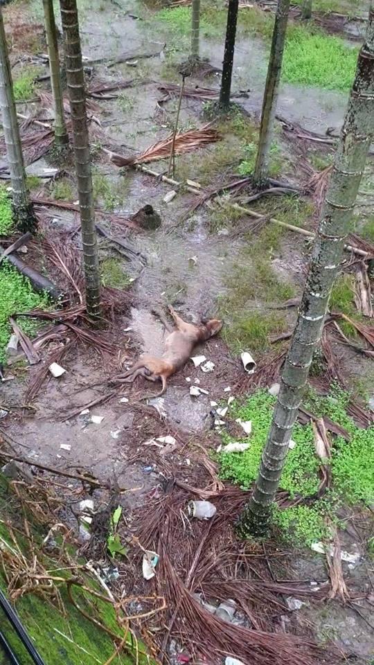 裝布袋丟下橋!癱瘓小黃咬洞自救雨中冷到狂抖 徐文良心痛:牠不是垃圾…