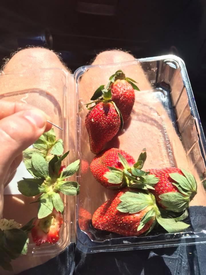 吃水果卻被刺出一嘴紅!澳洲爆發恐怖「草莓針事件」 農民心碎報廢:心血變垃圾...