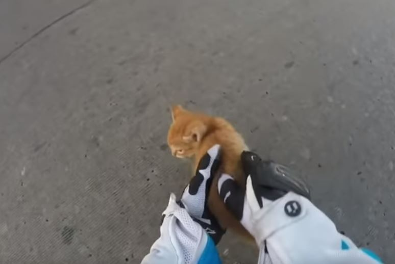 影/小貓突然「閃現馬路中央」!女騎士冒險伸手撈起 輕柔交給路人後帥氣騎走