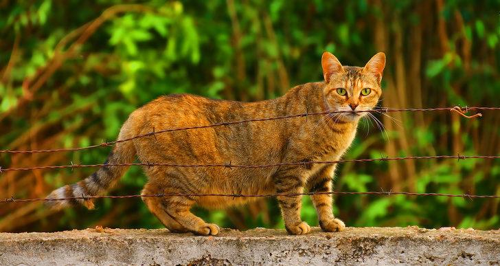 21張「動物懷孕」奇妙畫面 無毛貓光溜溜肚子超可愛❤