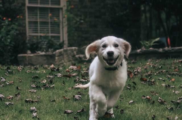 拉拉在鏡子裡看到「另一隻狗狗」 立馬分享最心愛的玩具:我們一起玩好不好~