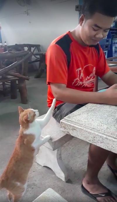 餓扁了還是有禮貌!浪喵「小手輕拍」路人討食:哥哥,分我一點飯飯好嗎~