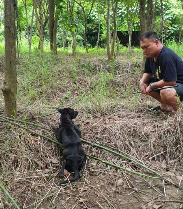 徐文良在闖荒涼地「救回歷劫存活的小黑」 耐心站旁邊喊話:跟我回家吧!