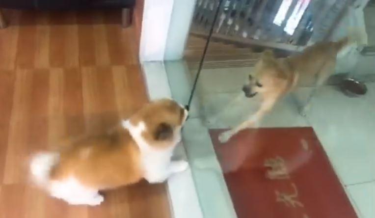 狗狗隔著門吵架 主人開門「讓牠們打一場」後勁超強!