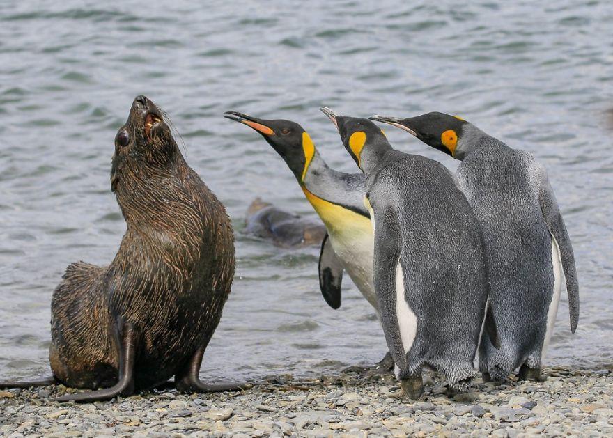 工讀生快粗乃!30張「搞笑野生動物攝影獎」爆笑得獎照 北極熊做瑜珈太可愛啦❤