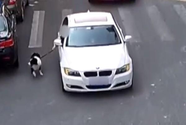 想哭片/天真傻邊境「拉肚肚不舒服」 主人卻怕髒不准上BMW沿街拖