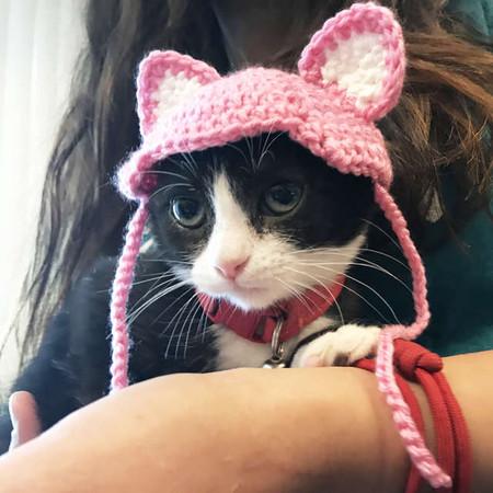 白襪小貓「頭頂粉色小毛帽」 超萌背後卻是「被人類切耳朵」的遺憾QQ