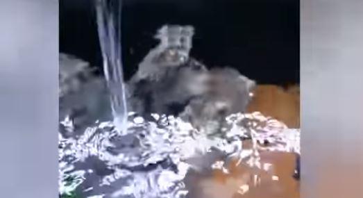 報復男友劈腿!「整桶漂白水」倒魚缸 失控尖叫:你看牠們在翻肚