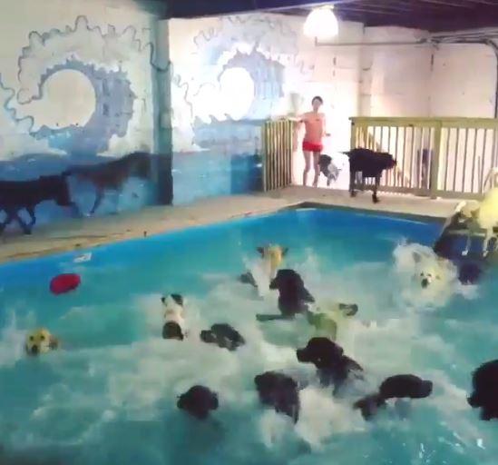 放風啦!汪星人興奮跳水秒變「狗狗大浴場」:你們不要再擠了~