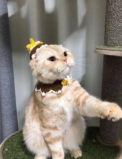 請問黏在本王頭上那是啥?橘貓眼神死:這什麼蠢到爆點的爛貼紙啦~