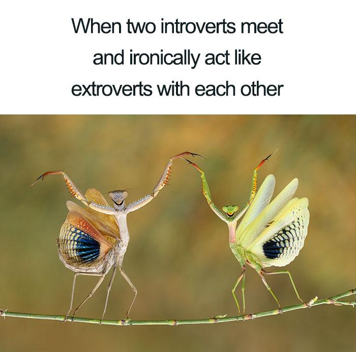 17張「表現你內心感受」的中肯梗圖 走廊遇見同事表情真的是這樣XD