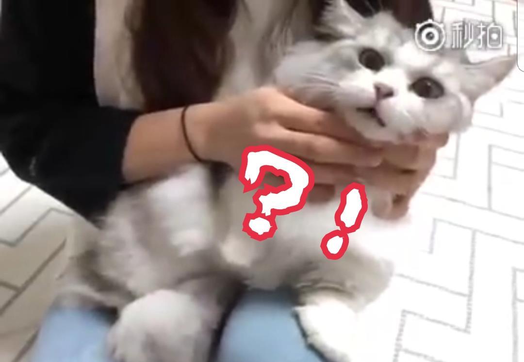 貓奴塞「謎之物」進貓皇嘴裡 瞬間變身傻眼貓咪:你給朕...吃了什麼!