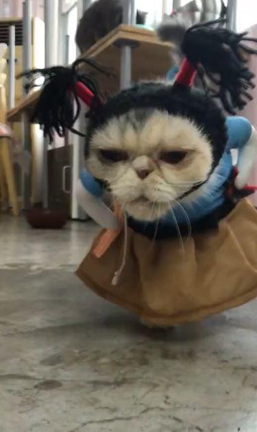 「姥姥貓」搞笑古裝+沖天炮 臭臉手插腰:奴才給我穿這啥鬼!