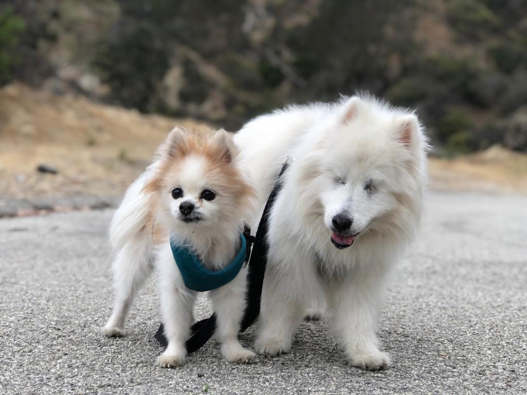 愛冒險哥哥雙眼看不到 暖心毛弟「當牠雙眼」開路:讓我牽著你去探險!