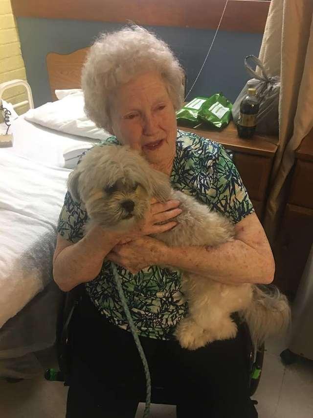 痛失愛犬心碎...家人獻上「毛茸茸小驚喜」 奶奶眼角閃過幸福:我的小寶貝回來了...