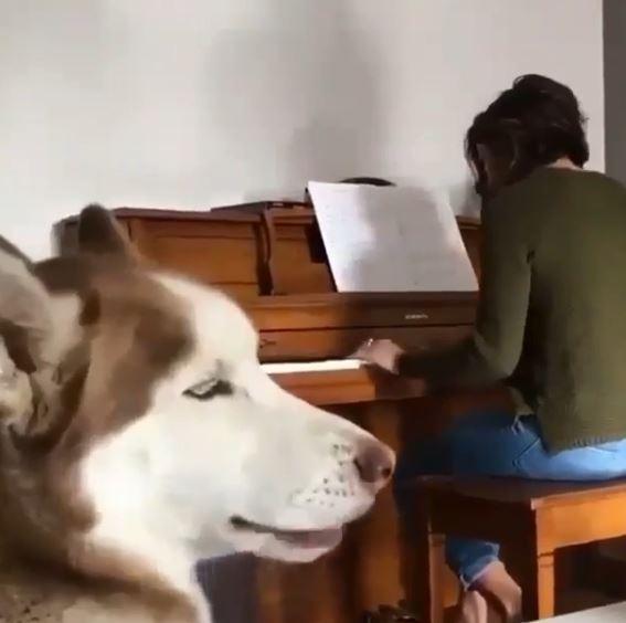 陶醉月月高唱「凹凹嗚之歌」 還懂配合彈琴聲:偶94狗界的帕華洛帝~
