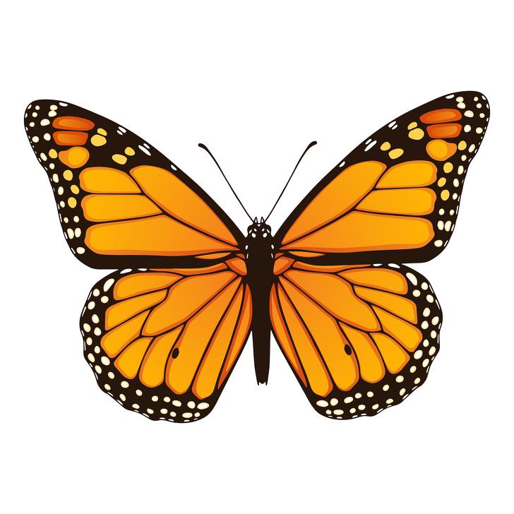 「第一眼看到的動物」揭露你內心的真實個性 選了蝴蝶代表你玻璃心!