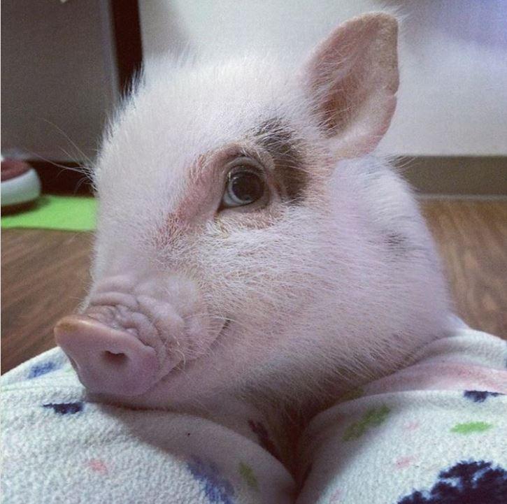 20張讓你看到忍不住會說「可惡好想抱緊啊」的可愛動物照片