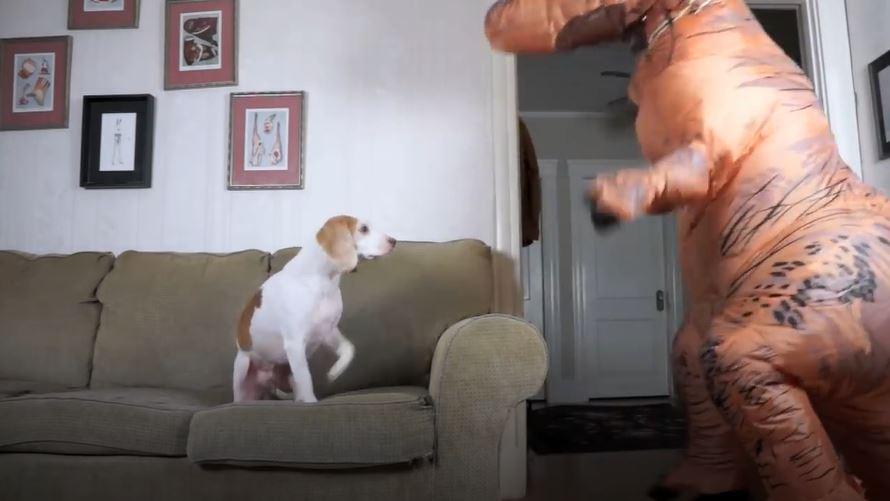 主人穿恐龍裝走進客廳 狗狗「眼神呆滯」迎接:請問...是客人嗎?