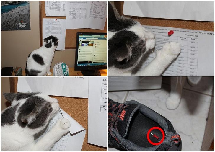 22張照片讓你完全認同「貓咪就是個混蛋」QQ 除了女友不讓你工作外就是牠們了!
