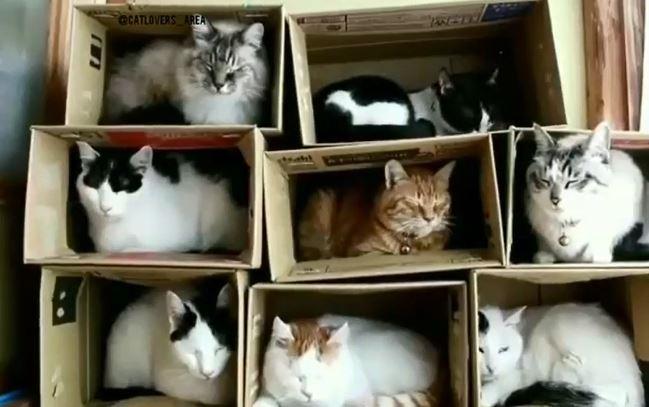 治癒款貓咪公寓!超萌睡貓「8個紙箱塞好塞滿」 踩上去差點崩塌:違章建築啊~