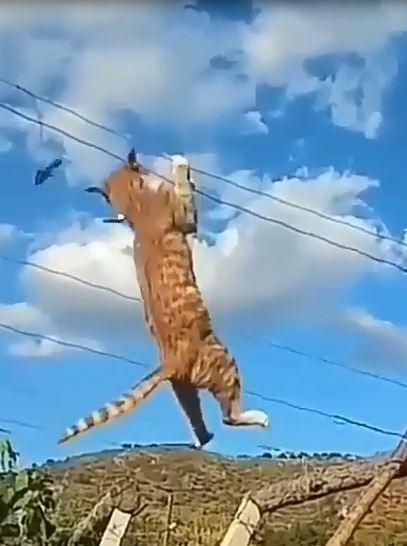貪玩小橘貓「倒吊鐵絲」抓小魚! 抖動一下還是輕盈落地:哥哥練過別學蛤~
