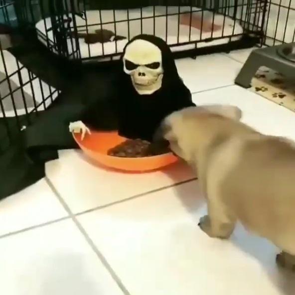 主人貼心買新玩具陪巴哥吃飯 牠不屑走近飼料盆秒嚇歪:夭壽咧!嚇飽了…