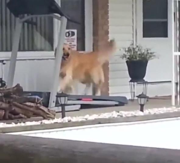 狗兒當自強!主人沒空帶牠散步 阿汪直接跳上跑步機:我自己溜自己~