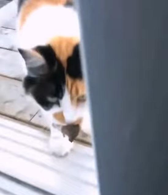 另類版貓的報恩?皇上帶「伴手禮」回家 奴才嚇到狂叫:你是自己想加菜吧!