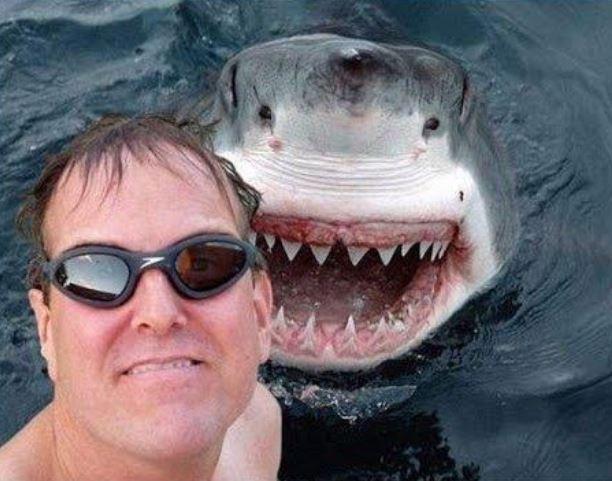 沒人比我衰之「12個杯具事件」前一秒 跟鯊魚自拍後...然後就沒有然後了