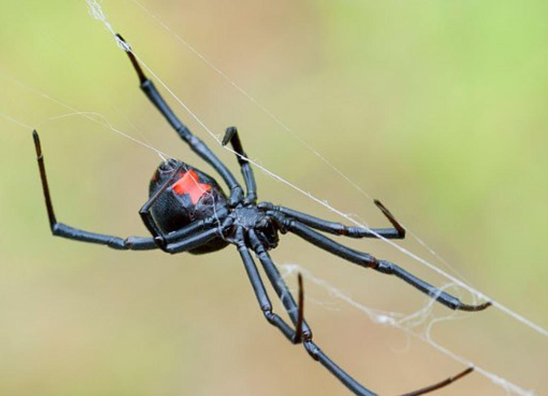 為了一隻蜘蛛...23歲男拿「點火鍋神器」在家中狂掃 爸媽回家傻眼:房子都沒了!