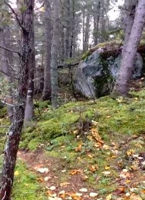 恐怖片/登山客拍到森林像「人類一樣吸氣吐氣」 嚇到不敢往前走:它是活的...