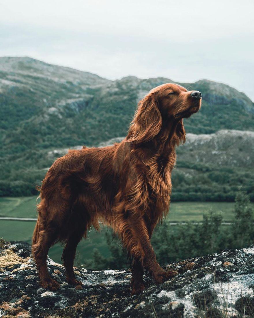 攝影師主人鏡頭下的汪星人!最美登山獵犬變模特兒 每走一步都是鎂光燈焦點啊QQ