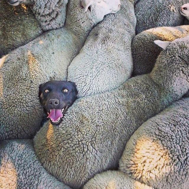 24張「回家讓你想擁抱狗狗」的照片 尤其在假裝自己人類時...根本填補你空虛的心!