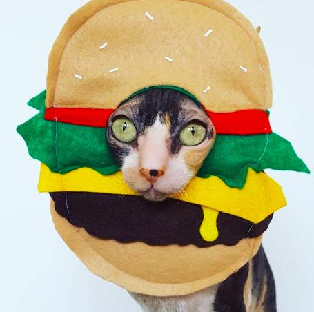 奴才的娛樂太壞!萬聖節「主子逗趣型裝扮」 漢堡髮圈直接點燃怒火:50個罐罐都不夠賠