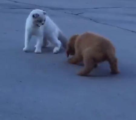 這次真的戀愛了!憨犬被煞到「秒變癡漢狗」一路跟回家 貓皇崩潰求饒:大哥,我是公的QQ