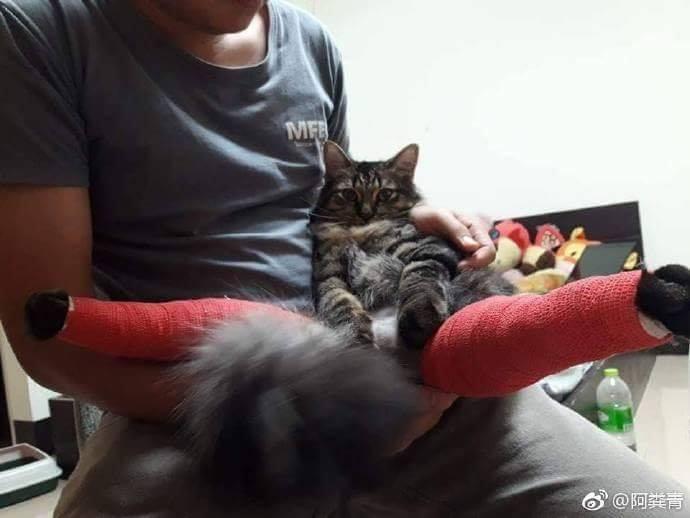 貓皇腳腳受傷送包紮 出診間變「妖豔長腿貓」超厭世:朕被玩壞了...