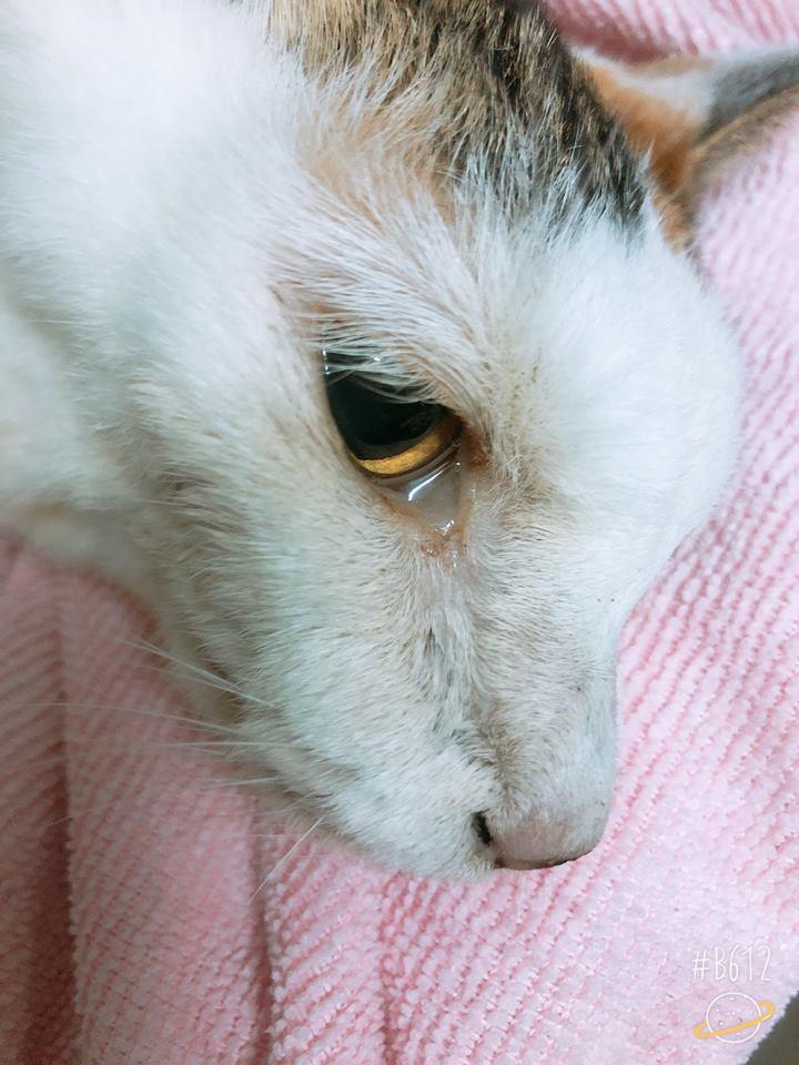 陪伴22年愛貓離世前不捨流淚...她忍住悲傷輕撫:不怕,現在換我陪妳