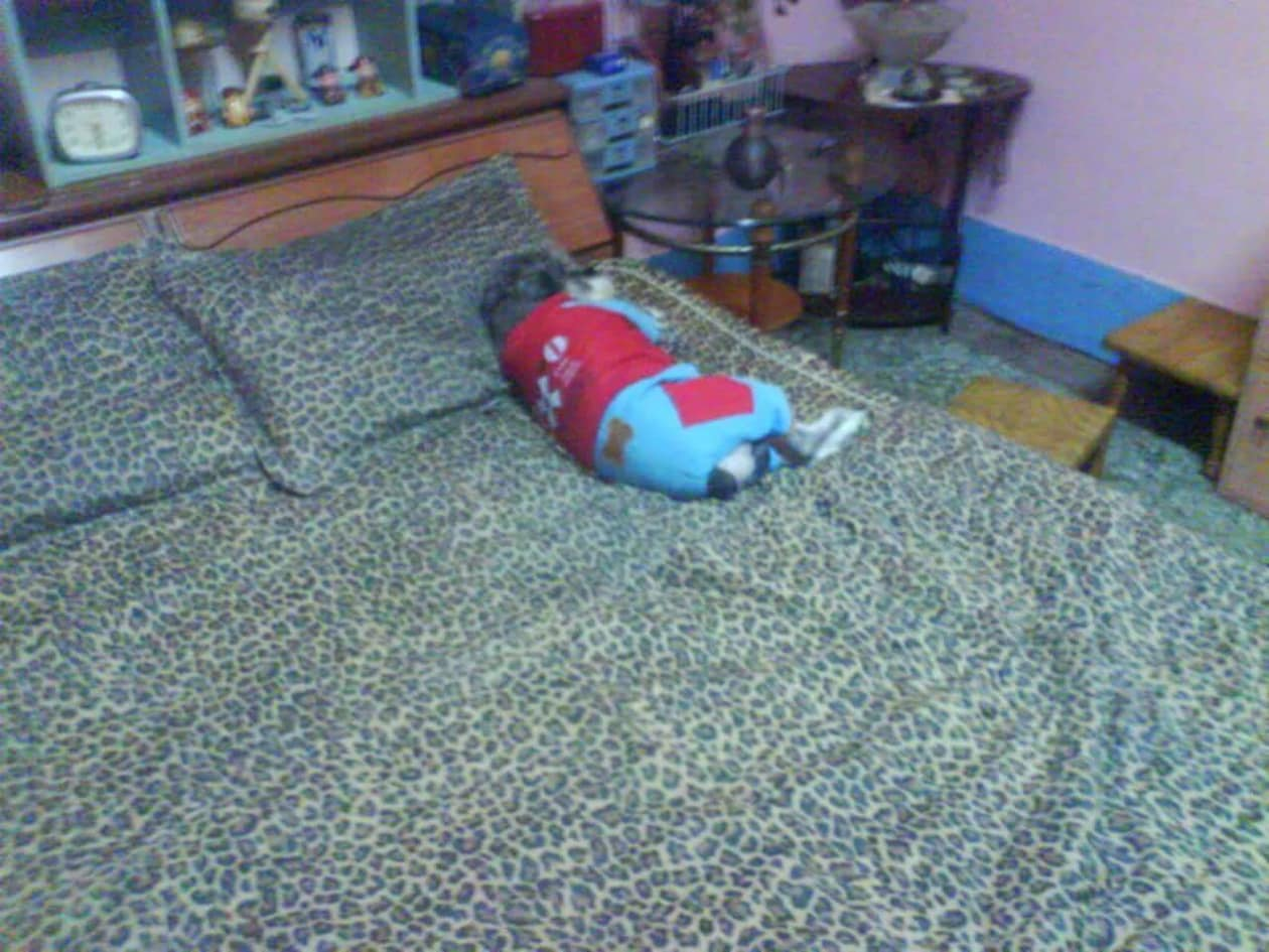 主人DIY「豪華別墅」給狗狗睡 牠直接跳上床躺平:94要睡這讓你交不到女友~