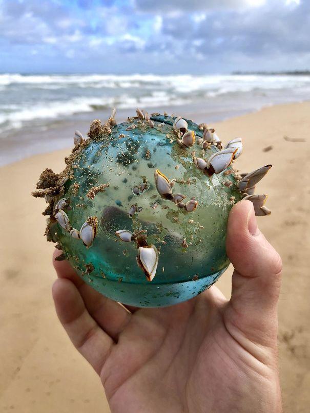 10張最出乎意料的收穫照!走在海邊撿到「奇特水晶球」 上面有整個海洋生態系統!