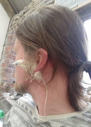 動物標本藝術家「把老鼠變耳環」 只買半隻的還能當磁鐵吸在冰箱上!