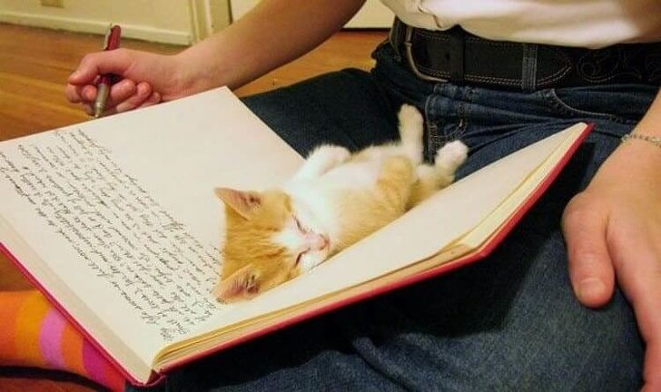 超療癒!20張「為什麼可以睡成這樣」動物可愛睡姿照 看完好想跟著一起睡啊~