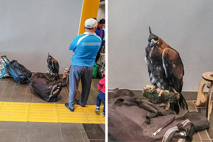 18張「上天總是怕你活得太無聊」的日常驚奇照 像瑪麗蓮夢露的鴿子!