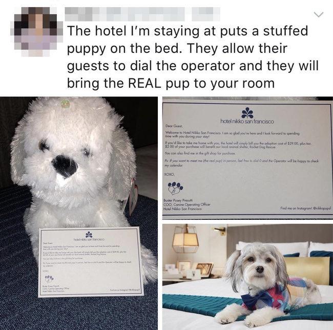 16個比蛔蟲還了解我們的「飯店設計」  出租金魚給孤單旅客