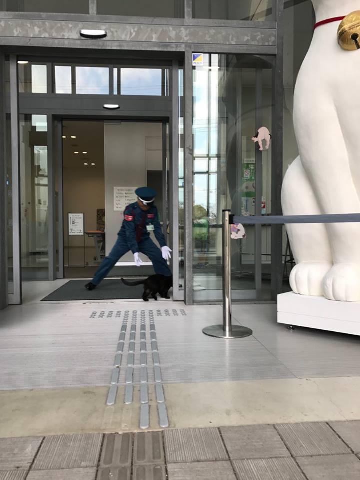 這套路太深...日本美術館「肥橘貓揪團」天天想闖進 保全崩潰掏錢:要不~買罐罐吧!