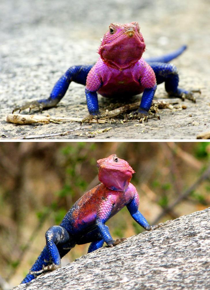 20個很可能是來自魔法世界的「怪奇動物」 像《魔物獵人》的龜太霸氣!