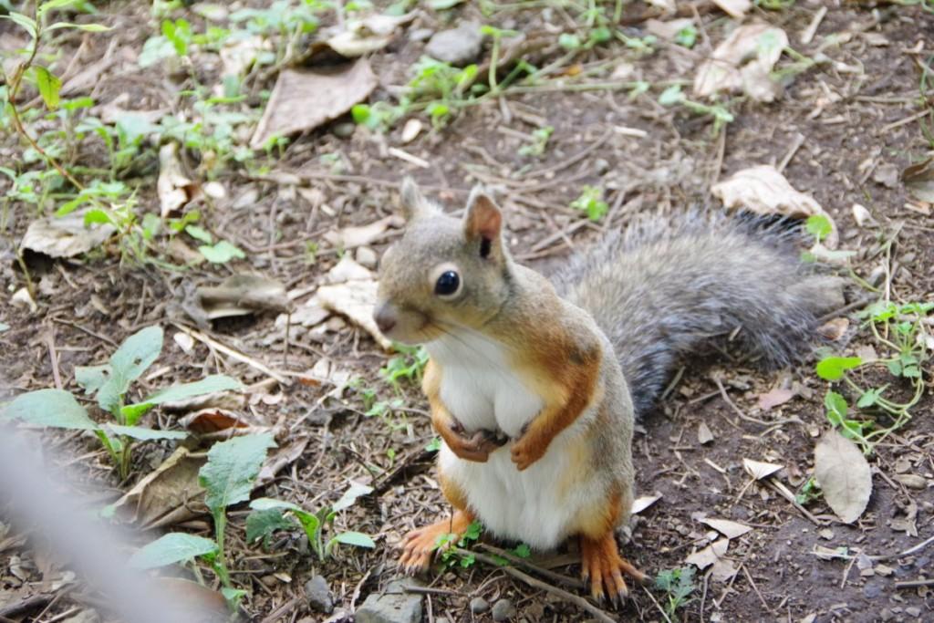 我要成為海賊王!日本公園驚見「松鼠界娜美」性感值爆表 網驚:這一定吃青木瓜長大的!