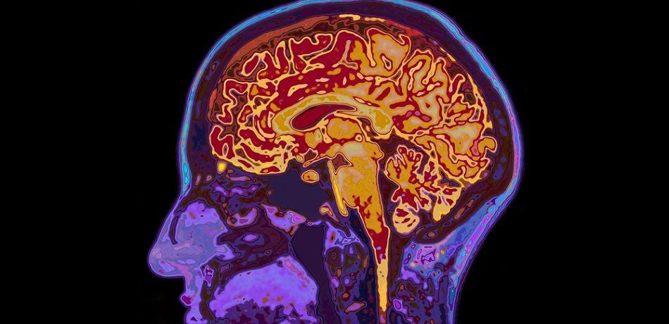 61歲大叔突然說不出話來 送醫之後「醫生也查不出原因」家人爆:他喀了松鼠腦袋...