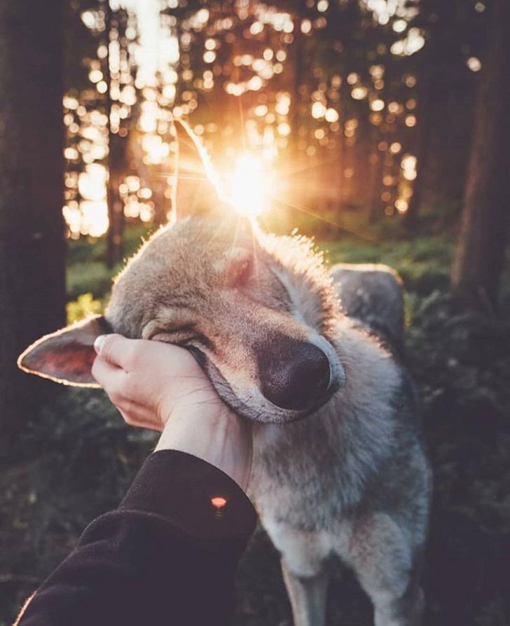10個動物「閃瞎眾人」的親密瞬間 看到第4張...只能默默戴上了墨鏡